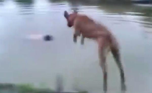 溺れる飼い主を助けるイヌ