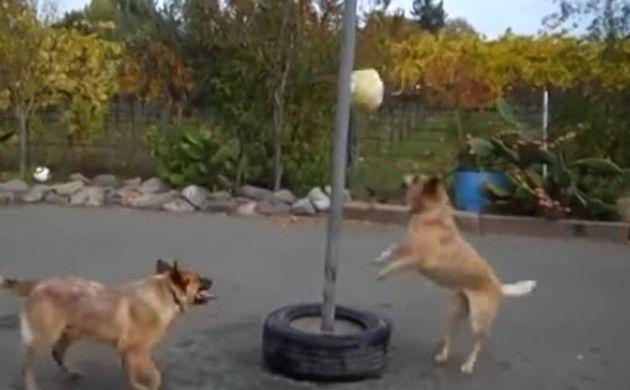 犬を遊ばせるボールの棒