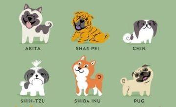 世界の犬種