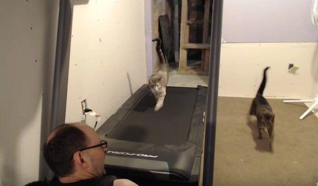 トレッドミルを歩くネコ