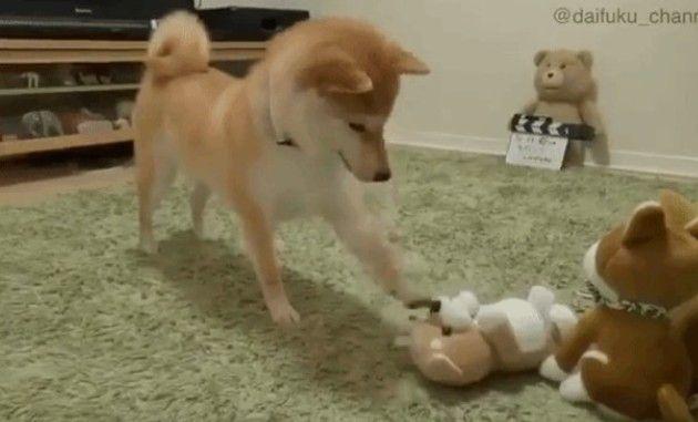 モノマネ玩具と柴犬