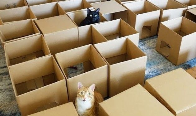 段ボールで猫の迷路