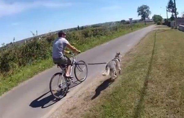 イヌを自転車で散歩する方法