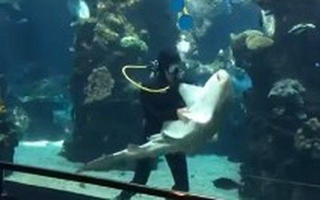 サメを猫可愛がり