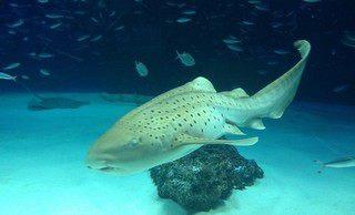 一人でサンシャイン水族館