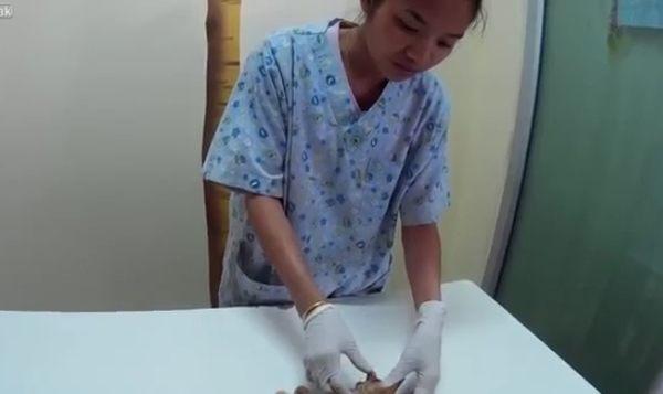 クルマに轢かれた猫の救出と埋葬