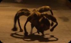 イヌがクモのコスプレドッキリ