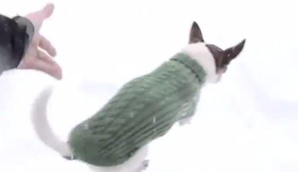 雪に埋まるワンコ