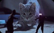 小人とネコの動画