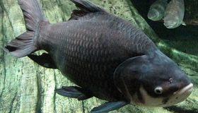 淡水魚マニア聖地アクア・トトぎふ