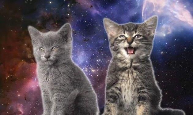 宇宙ネコのオートチューン