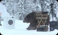 洗濯機のテスト中に熊がやって来た。