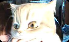 画面が歪んでアニメみたいな顔になるネコ