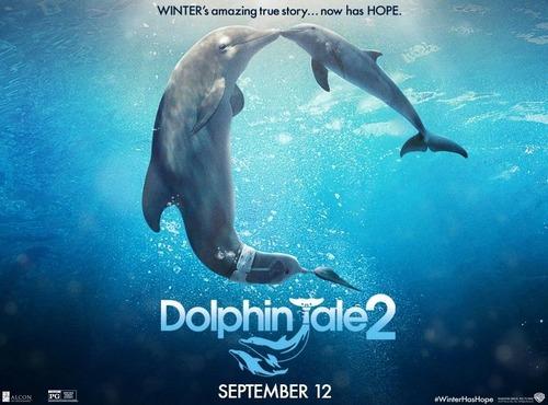 """「イルカと少年2」(""""Dolphin Tale 2""""2014米国)"""