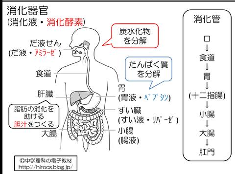 解説 消化器官