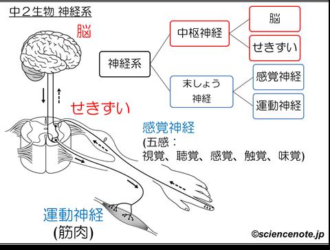 解説 神経系_rev