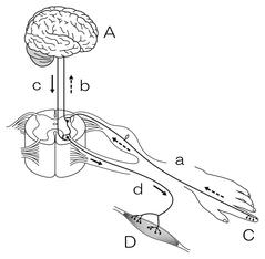 図 反応経路 記号