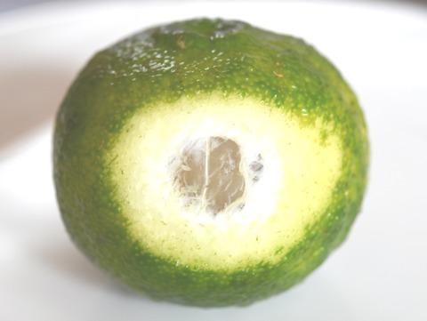 aoyuzu-1