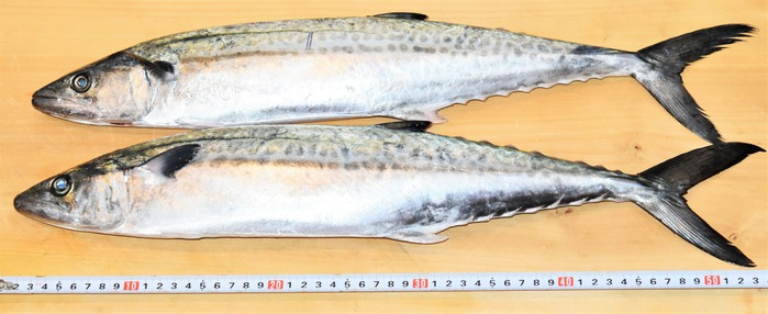 sawara0129