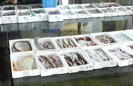 安岐港魚競り1