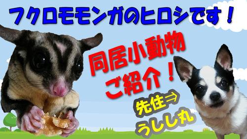 YouTubeサムネイル先住小動物紹介3