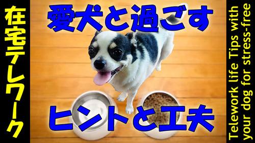 愛犬とテレワーク-1