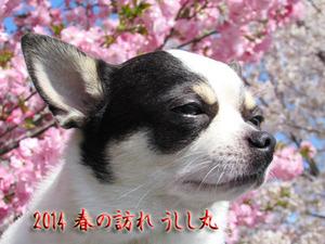 2014-Sakura-2jpg