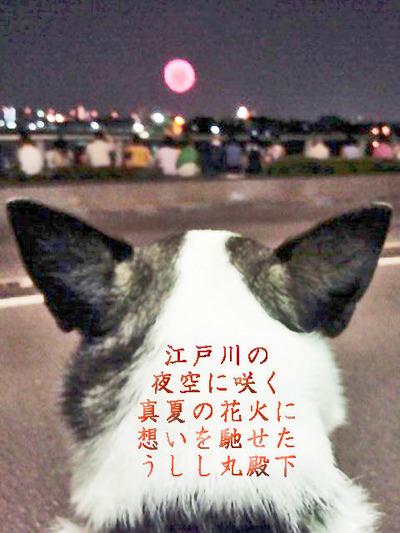 2015花火