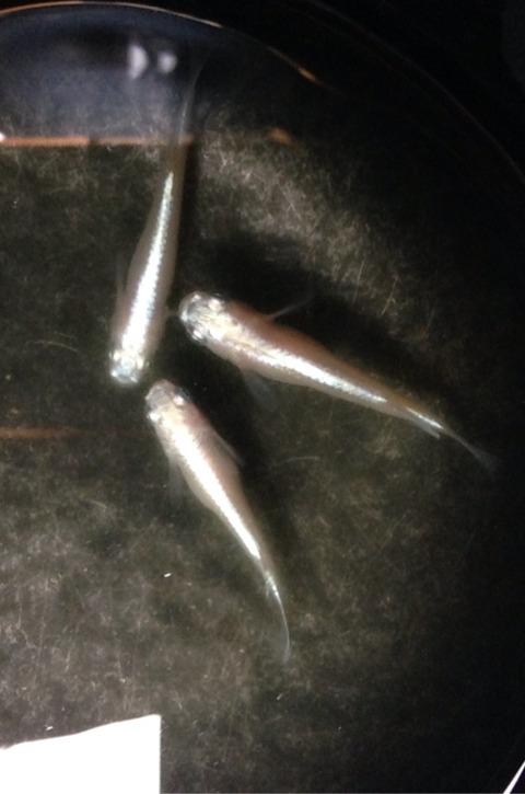 幹之メダカフルボディ光の特徴