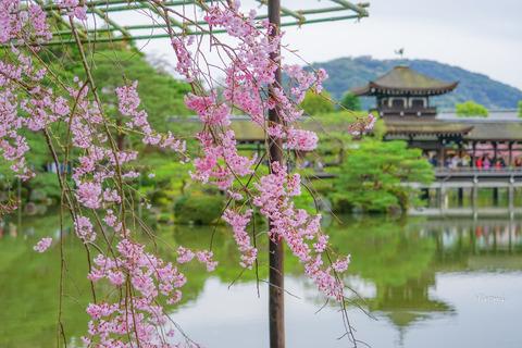 lr blog heianjingu-02977