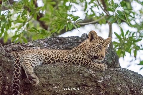 lr blog Londolozi Leopard-00871