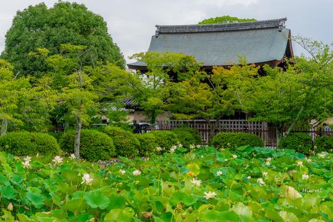 lr blog Tenryuji-00383