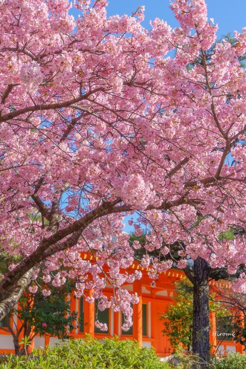 lr blog Sanjusangendo-00839