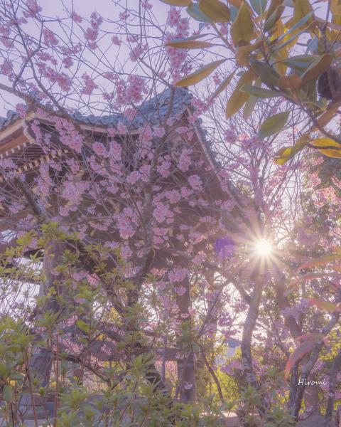 lr blog Chionji-00942