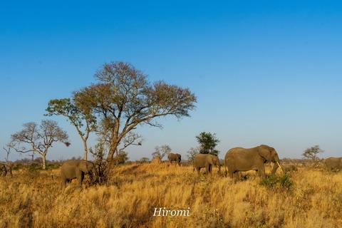 lr blog Londolozi Elephant-04094