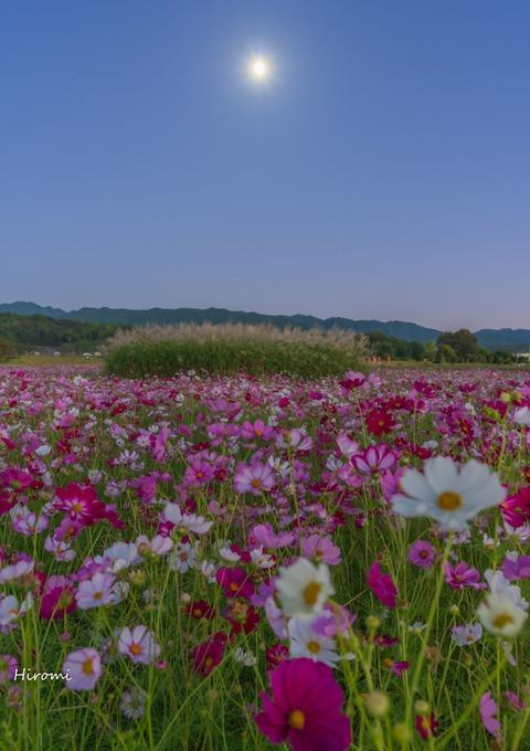 lr blog Fujiwarakyuseki PS-