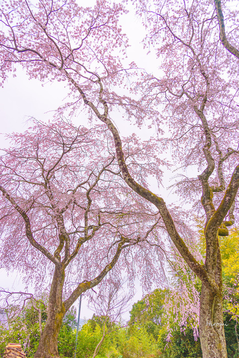 lr blog Sanotouemon-01592