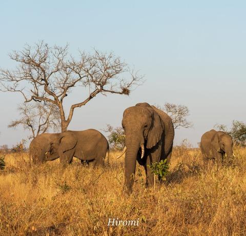 lr blog Londorozi Elephant-01188