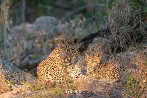 lr blog Londolozi Leopard-01128