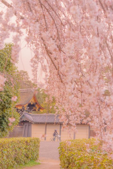lr blog Kyotogyoen-01529