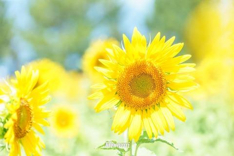 lr blog Yasu-06618
