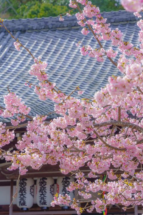 lr blog Horinji-03690