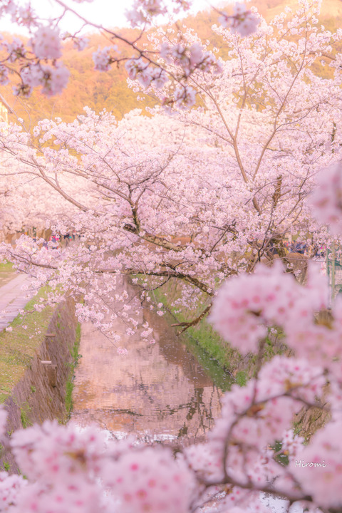 lr blog tetsugakunomichi-06385