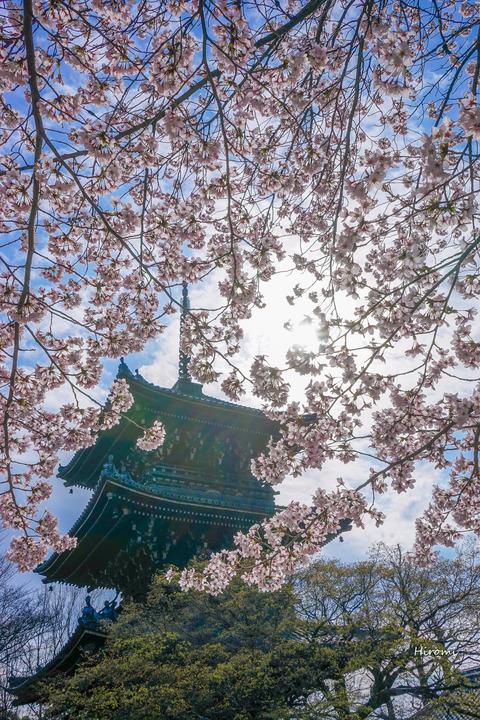 lr blog Shinnyodo-02436