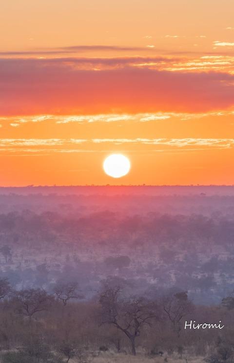 lr blog Londolozi sunrise-01800