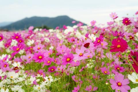 lr blog Nodacho-00958-2