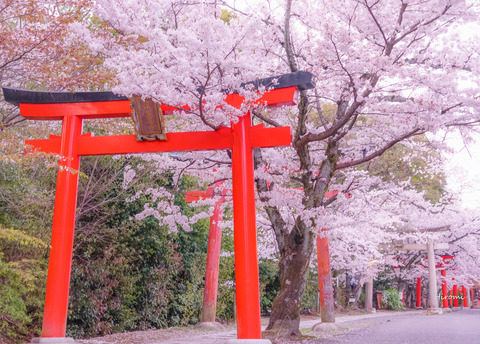 lr blog Takenakainari-06418