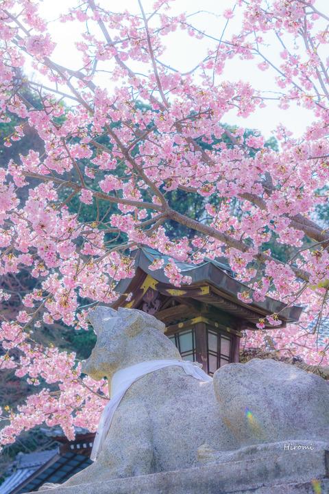 lr blog Horinji-03674