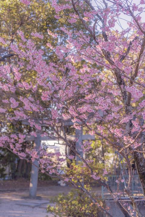 lr blog Chionji-00935