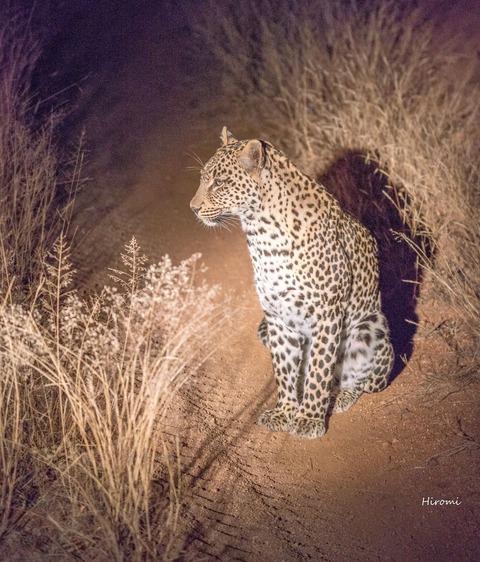 lr blog Londorozi Leopard-01453